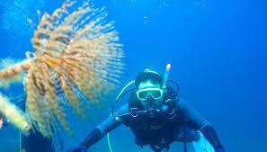 petries-scuba-diver-school